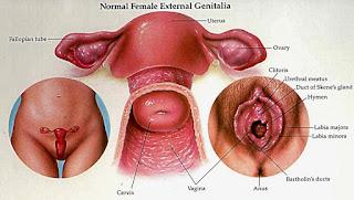Kanker Serviks - Gejala, Penyebab, dan Ciri Ciri