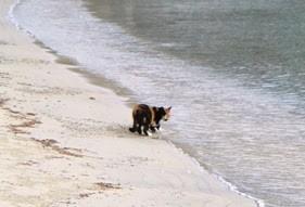 kolorowy grecki kot wpatruje się w morze jest gotowy wejść do wody