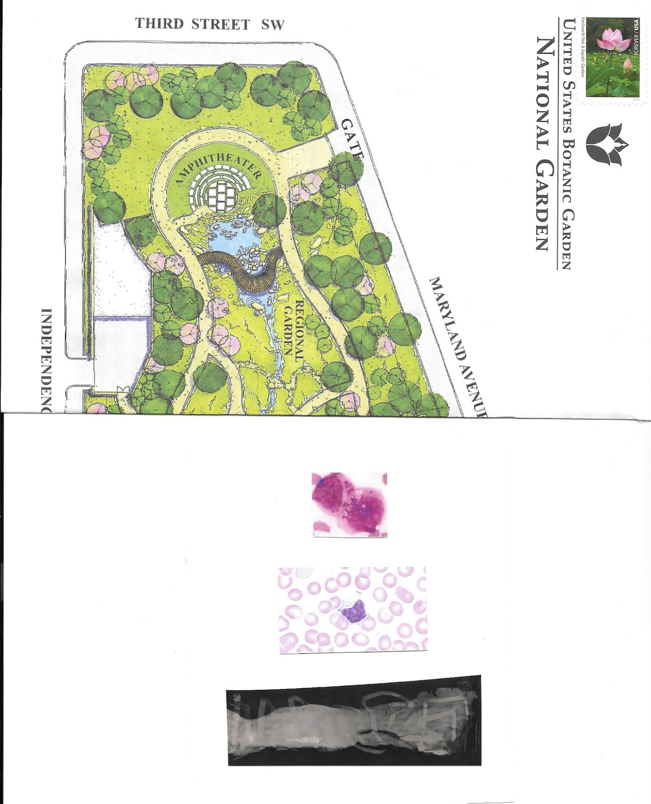 an envelope made from a map of the national botanical garden sent to honi c with a collage inside