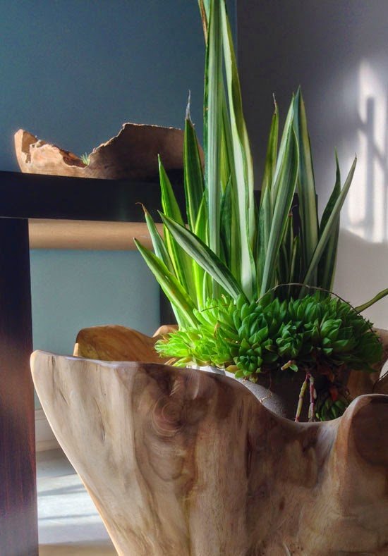 Attractive The Rainforest Garden: Grow a Miniature Forest in a Wood Bowl WI71