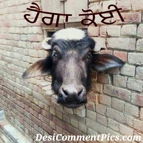 Punjabi Funny Wording Pictures For Whatsapp Whatsapp Images Funny Love And Romantic Funny Punjabi Jokes Images Status Pictures Pics