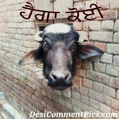 whatsapp funny images of Facebook punjabi