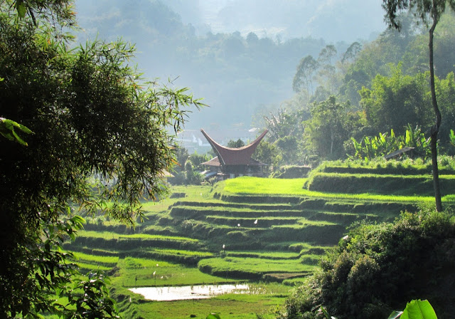 Fotografi rumah adat Tongkonan dari Tana Toraja Sulawesi Selatan