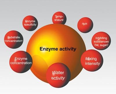Enzyme เอนไซม์ @ www.sternenzym.de
