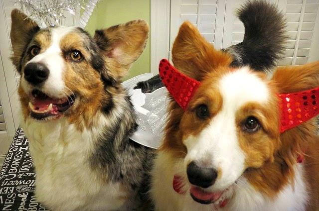 The Divine Canine Pet Hotel Llc