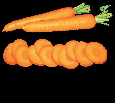 clipart wortel gratis download