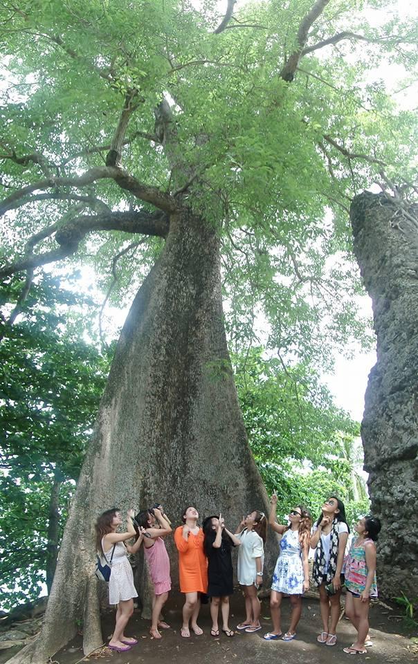 Guiob Old Ruins Centennial Tree
