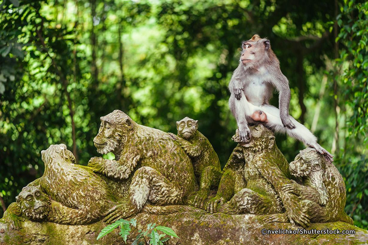 Wisata Hutan Monyet Ubud Bali Indonesia Itu Luas Dan Indah