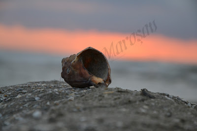 rasarit marea neagra scoica mamaia romania dimineata