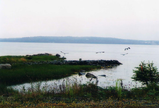 Eastern Shore Herons, photo by Leslie Hauck