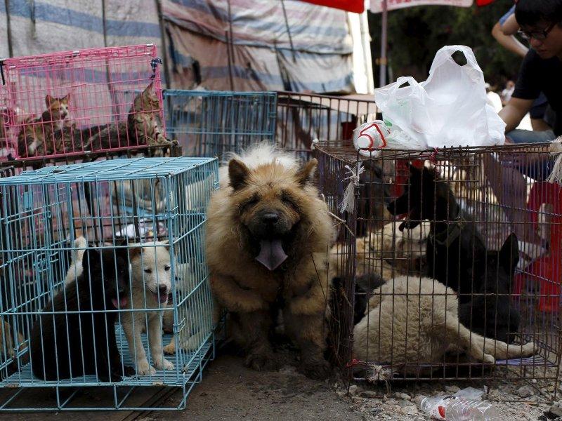Image result for Taiwan diz não para o consumo de carnes de cachorro e de gato