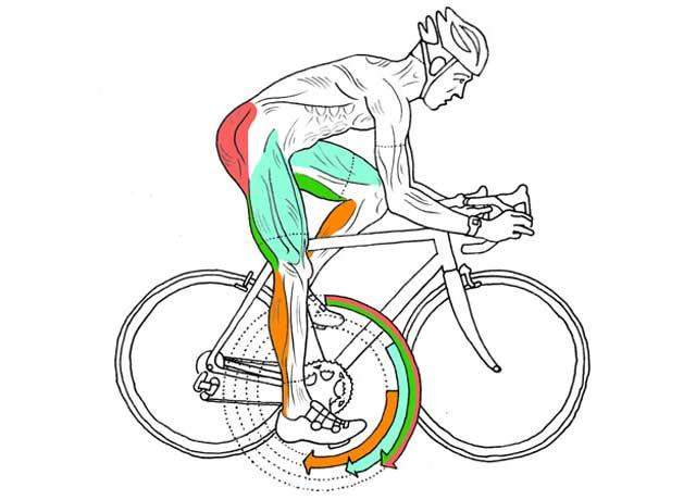 Bisiklette Doğru Pedallama Tekniği Nedir