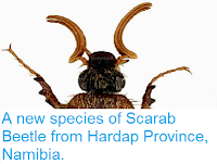 http://sciencythoughts.blogspot.co.uk/2014/09/a-new-species-of-scarab-beetle-from.html
