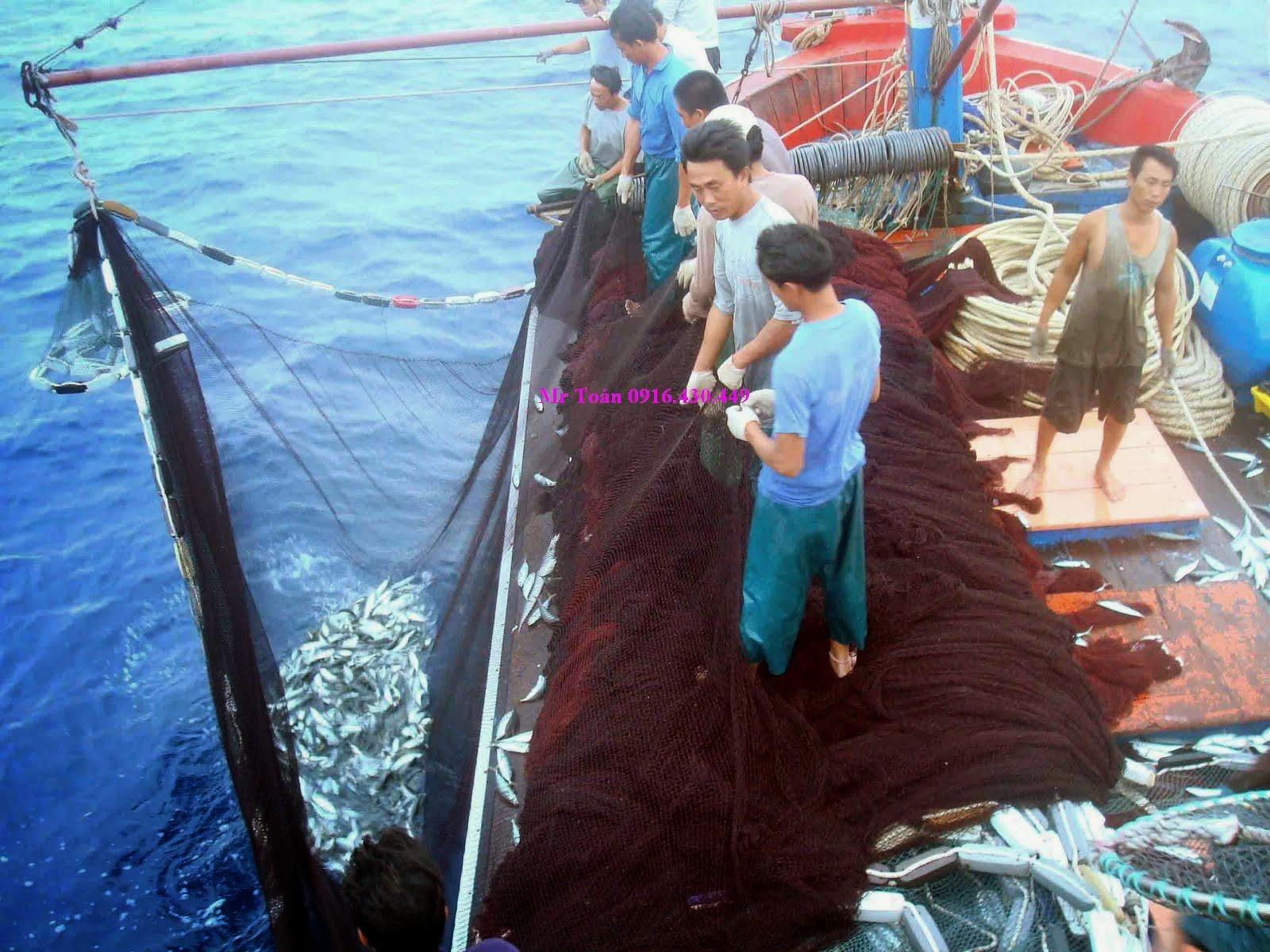 Ảnh Lưới Kéo Cá