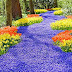 ~ Muscari Blue Hyacinths Blooming in Texas ~