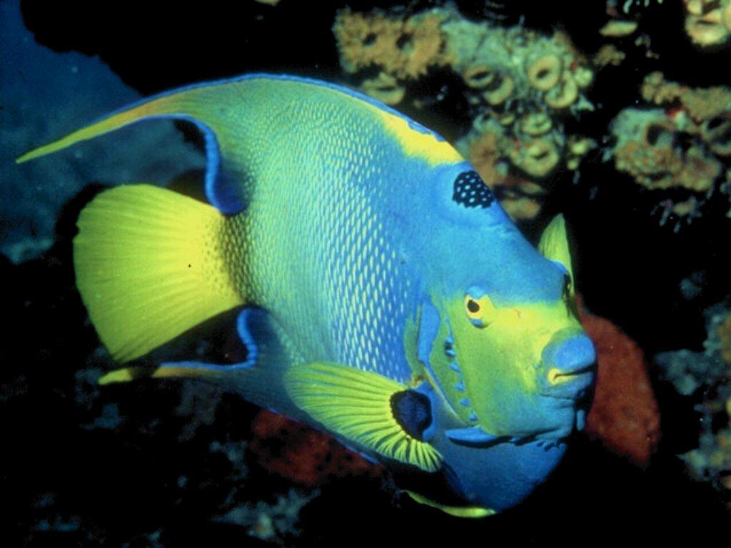 colorful fish - photo #17
