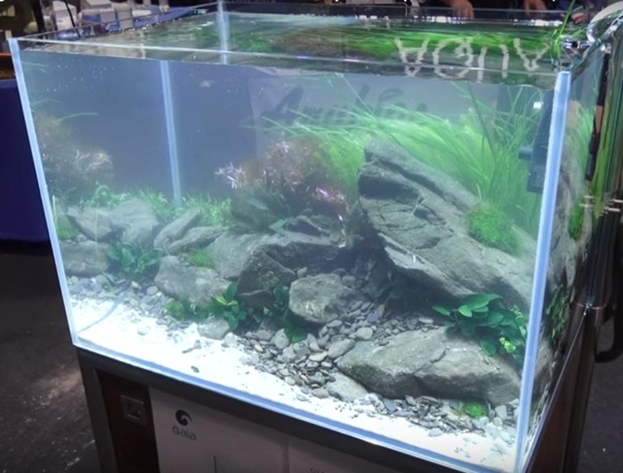 Unduh 80 Koleksi Background Aquarium Putih Paling Keren