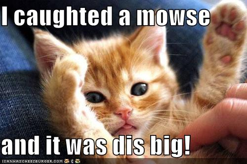 Funny Cat Memes: Funny Cute Kitty