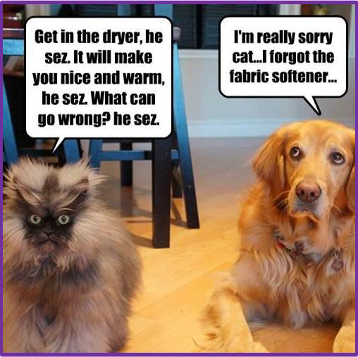 Dogs and cats amazing memes
