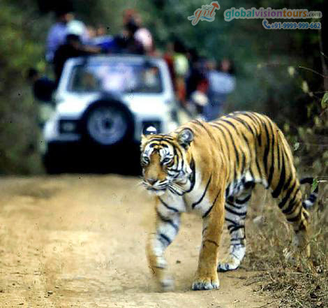 Charismatic Environment Of The Corbett National Park