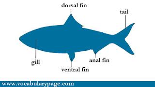 Parts of a fish