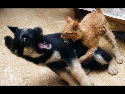 ¿Tienes gatos y perros?