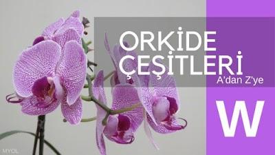 Orkide Çeşitleri W Harfi İle Başlayan Orkideler