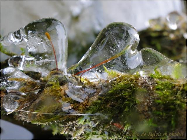 Plante germée dans glace