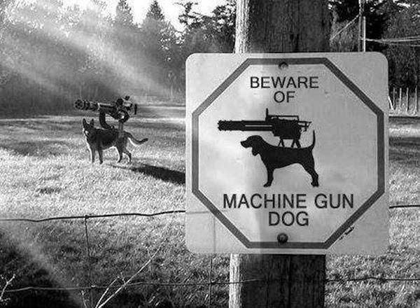 funny dog pics with guns - photo #5