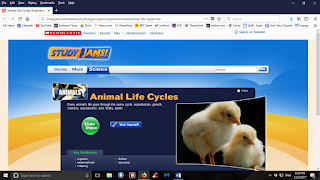 http://studyjams.scholastic.com/studyjams/jams/science/animals/animal-life-cycles.htm