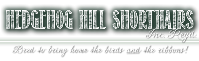 Hedgehog Hill Shorthairs