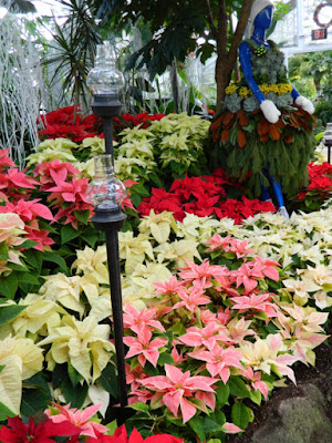 Allan Gardens Conservatory Christmas Flower Show 2015 massed poinsettias by garden muses-not another Toronto gardening blog