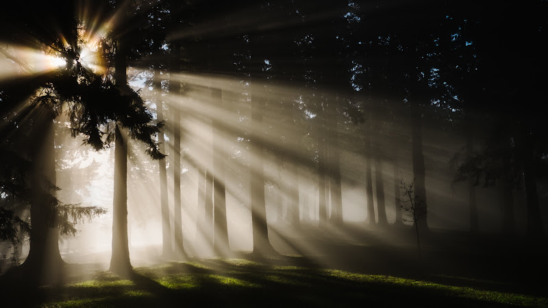 Sunlight through Forest Trees