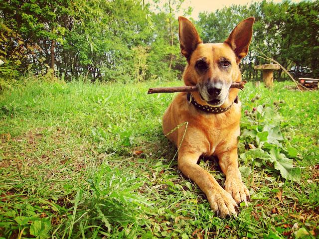 Moniówkowy pies Frida