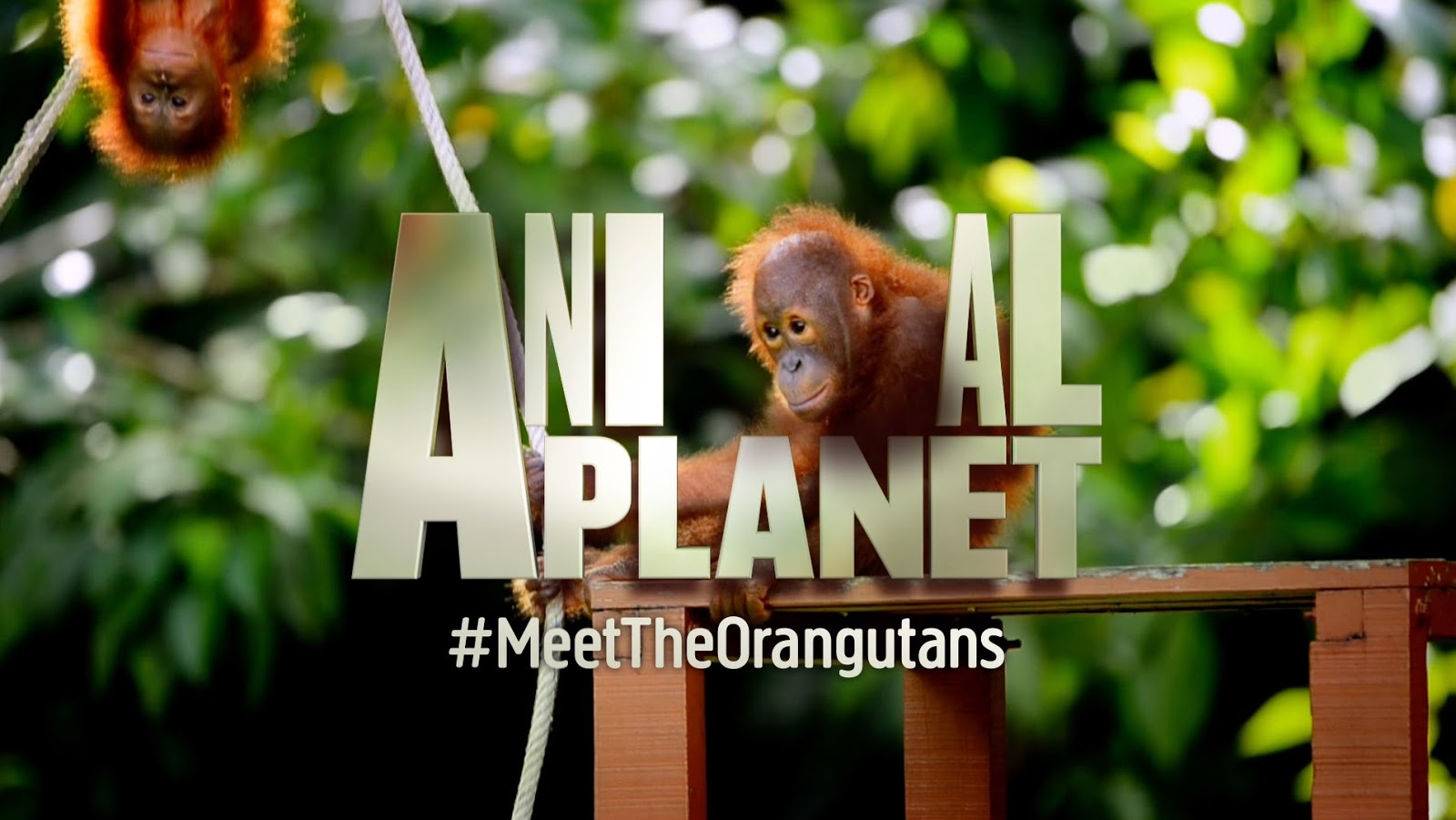 Animal Planet 2016 01 24 Wazzup Pilipinas News And Events