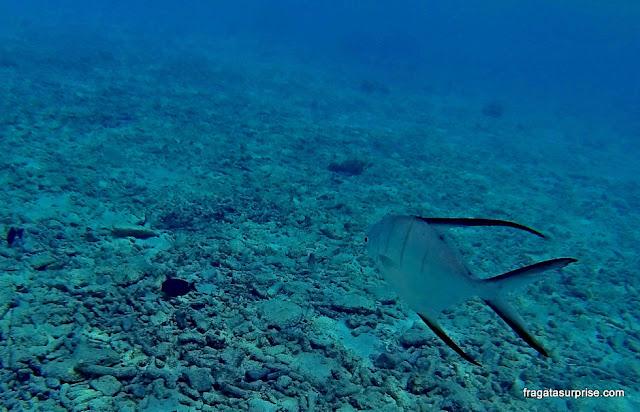 Mergulho na Praia de Cas Abao, Curaçao