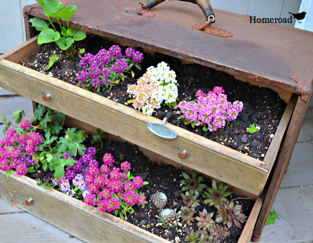 Fill a rusty vintage toolbox with dirt and flowers in the garden