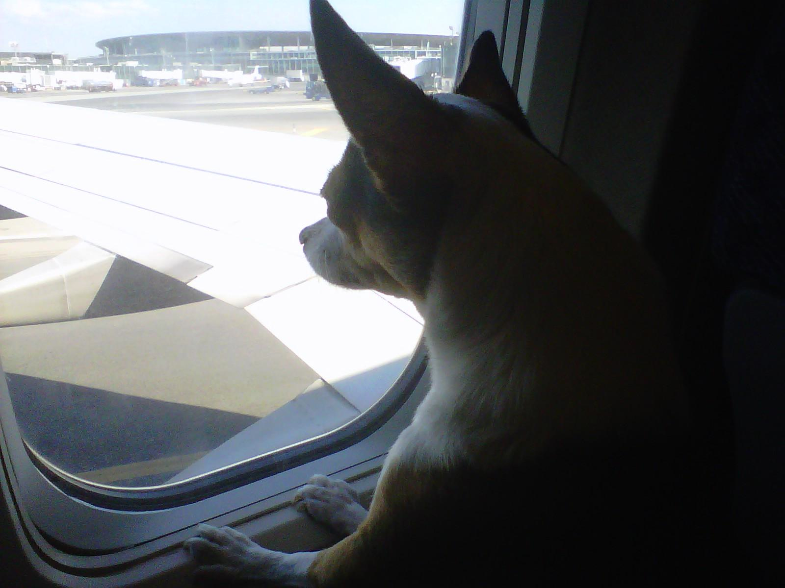how to fly with a dog in cabin