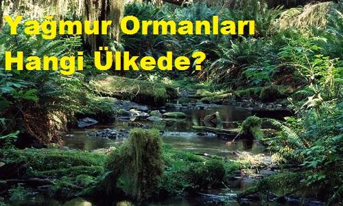 Yağmur Ormanları Hangi Ülkede?