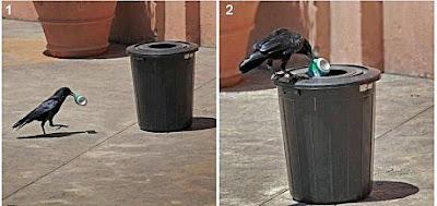 Lustige Tier Bilder - Vogel Rabe beim sauber machen