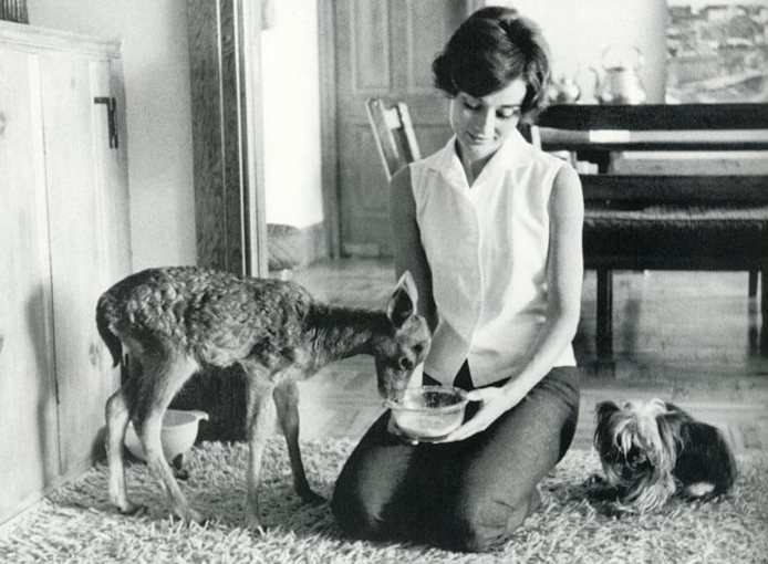 Audrey Hepburn, Audrey, Movie Star, vintage, animals