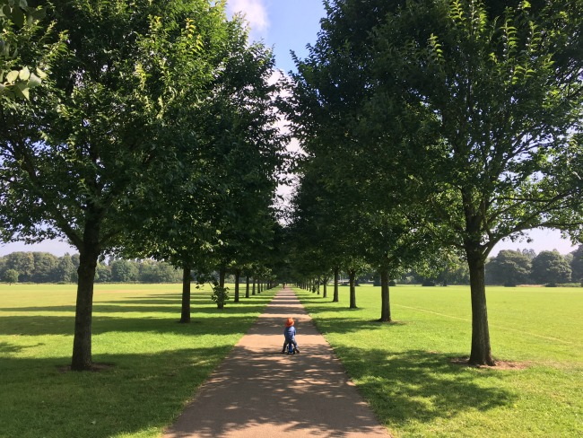 Bute-Park-Pontcanna-fields-a-toddler-on-bike-on-path-through-avenue-of-trees
