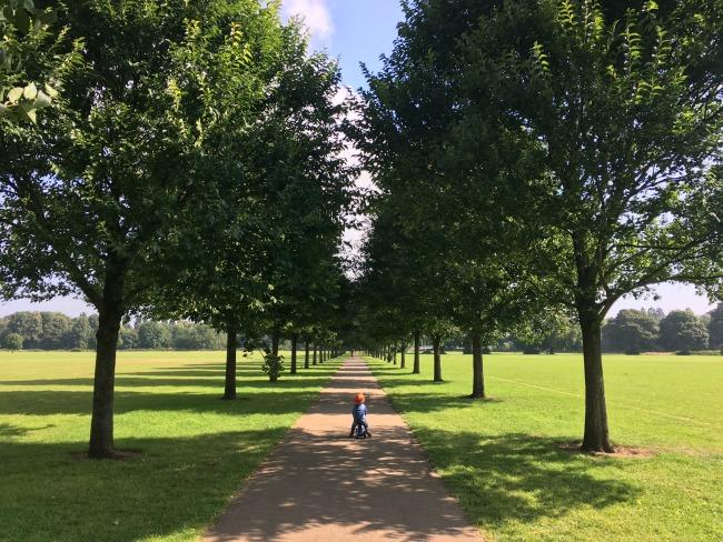 Bute-Park-Pontcanna-fields-a-toddler-on-bike-on-path-through-avenue-of-trees