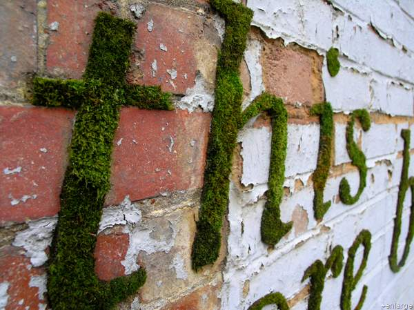 friendly casual how to make moss graffiti. Black Bedroom Furniture Sets. Home Design Ideas