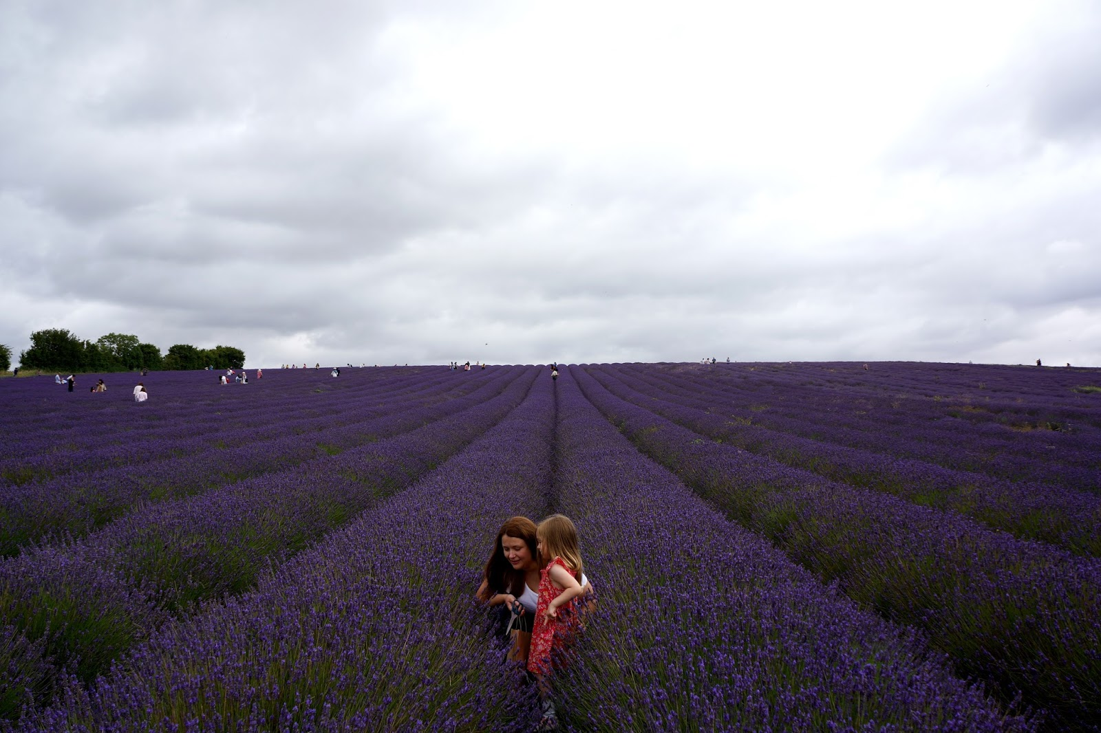 mum and daughter picking lavender at hitchin lavender