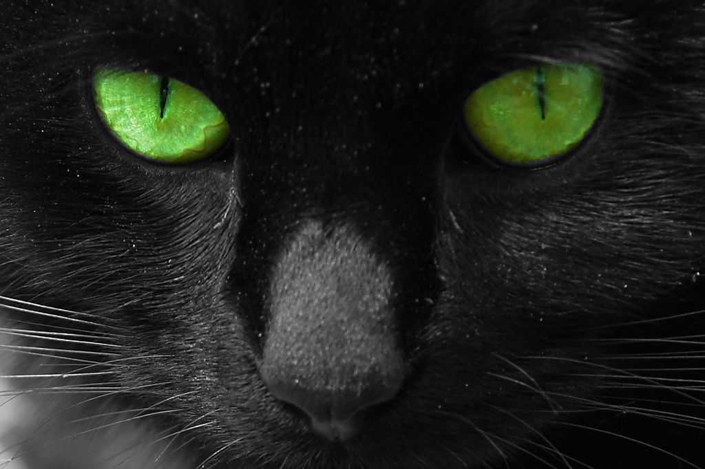 Black Cat With Pink Scary Eyes: My Friends Call Me Kate: Sabrina's Scary Christmas