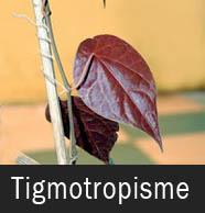 Gerak Tigmotropisme