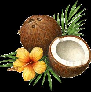 Praia coco barco farol guarda sol coca cola drink - Dessin noix de coco ...
