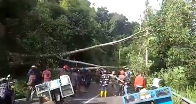 Pohon Tumbang, Kawasan Lematang Indah Rawan Bencana  14:10:07