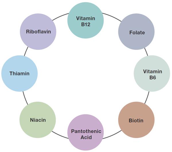 Hasil carian imej untuk b complex diagram